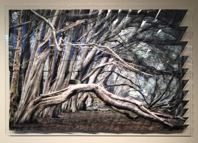 Cypress-F.jpg