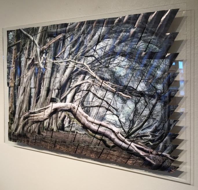 Cypress-S.jpg