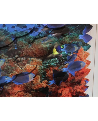 Trigger Fish-detail.jpg